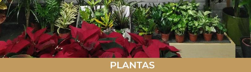 Tus plantas y orquideas en la gardenia floristeria